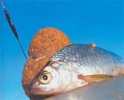 семечки для прикормки рыбы